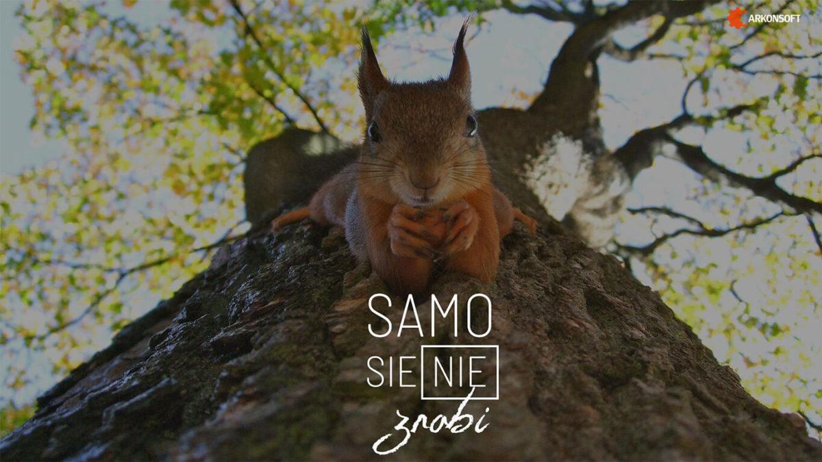 tapeta - wiewiórka